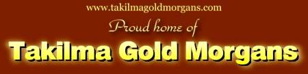 Takilma Gold Morgan Horses!